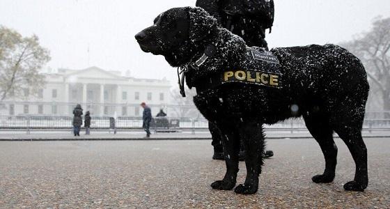 """تكريم """" كلب """" أنقذ باراك أوباما بوسام يعادل """" الإمبراطورية البريطانية """""""