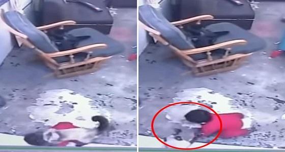 بالفيديو.. قطة تنقذ طفل رضيع من السقوط على الدرج