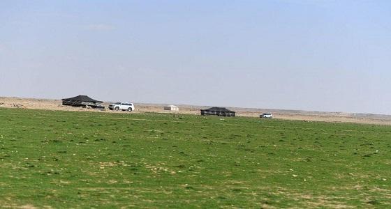 ربيع لوقة والحزول بمنطقة الحدود الشمالية يجذب المتنزهين.