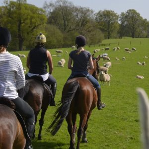Horse Trekking in Surrey