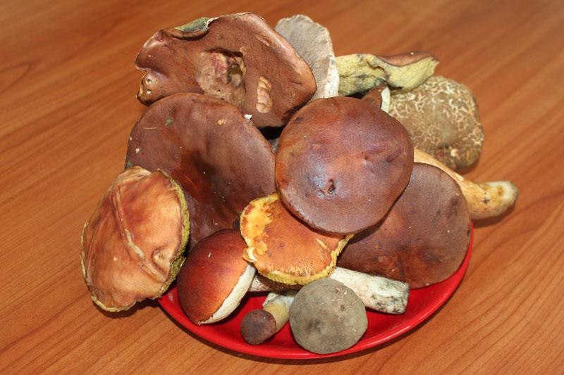 Hubový šalát, sladký život, zavárané hríby, sterilizované huby