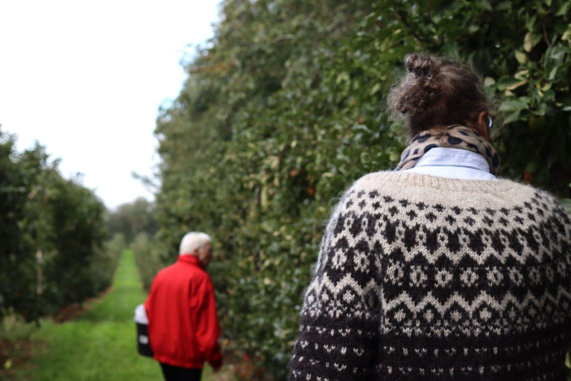 Frugthaven i Store Brøndum var målet for vores søndagsudflugt. Vi ville ned og plukke æbler til de næste ugers søde sult.