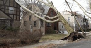 Fallen Tree - Article: Ransacking Nature