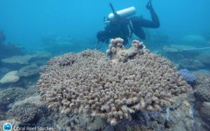 Vegan-Diving-Great Barrier Reef