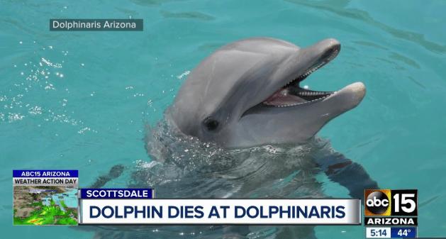 Empty the Tanks - Dolphin Dies in Arizona