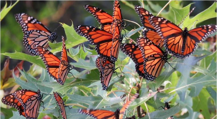 Masterpiece Monarchs - Bees
