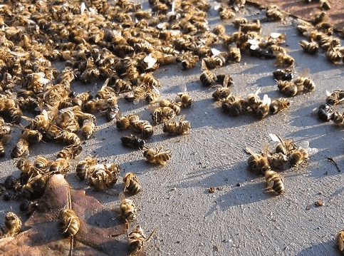 bees are in trouble