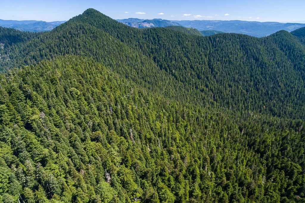 Old-Growth Rainforests