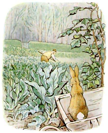 back to us again peter rabbit