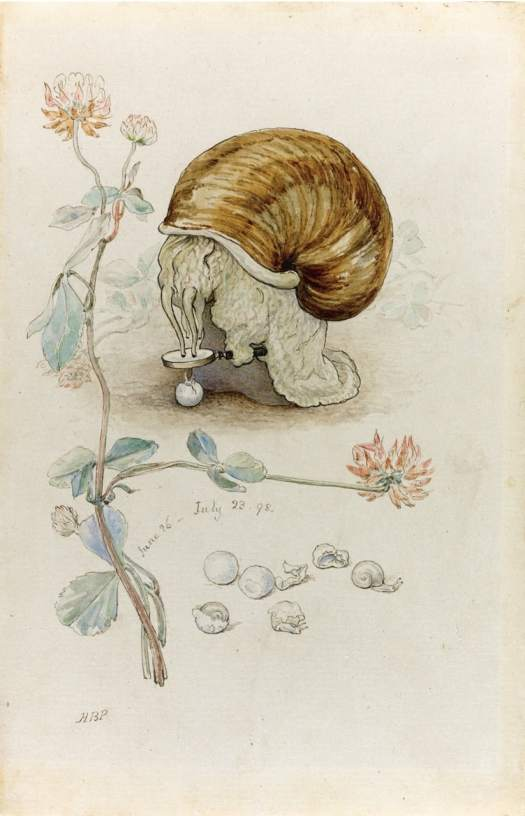 Beatrix Potter 'A Snail and its Young' 1898 ink, watercolour snail