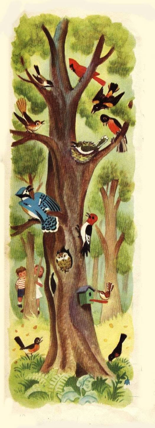 Jane Werner (1914-2005) and Cornelius De Witt (1925-1970) collaborated and produced this 1949 book called- Words How They Look and What They Tell birds in tree