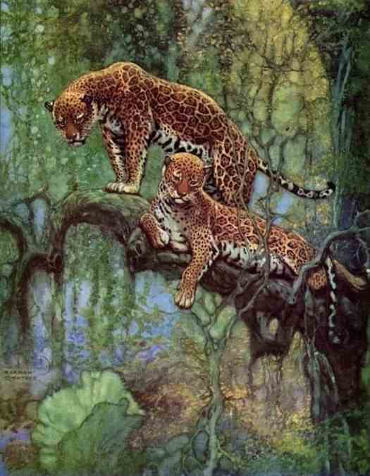 Nature Magazine cover illustration,1932 Two Leopards in a Tree by Herman Rountree