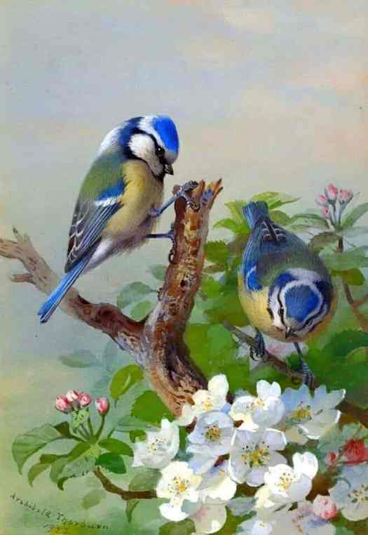 Archibald Thornburn, 1923, Spring Bluebirds on flower tree