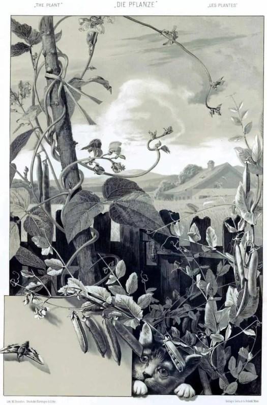 Anton Seder Die Pflanze Naturalistischer Teil pl 138 (1886-87) cat