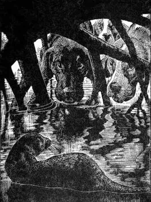 Charles Frederick Tunnicliffe (1901-1979) illustration for Tarka the Otter (1932 publication)