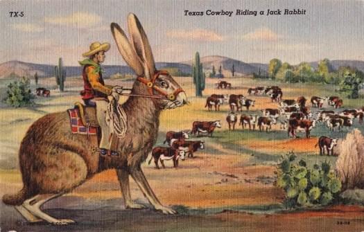 A Texas Jackrabbit post card 1950s