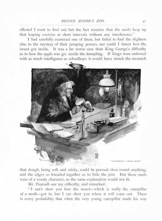A. F Gorguet Examining a Moth from A Night In The Woods And Other Tales and Sketches