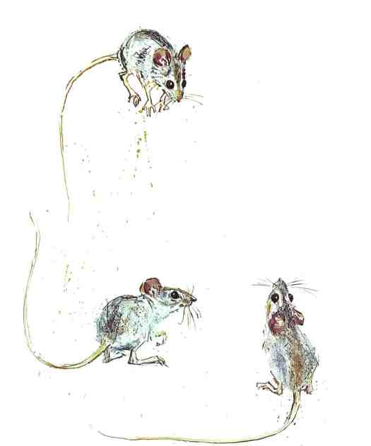 Animals from the Bible, part 1, all Kinds of Birds and other Creatures Fritz Hug 1960 mice