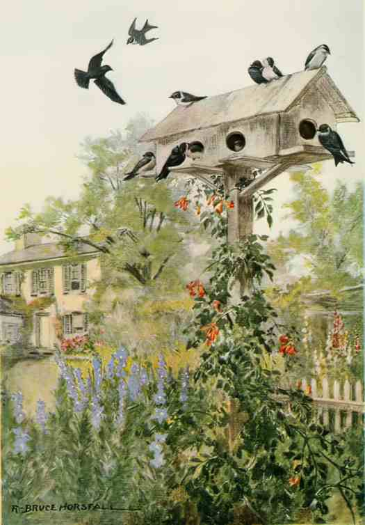 Bird Biographies A Guide-Book for Beginners by Alice Eliza Ball (1867-1948) Illustrated by Robert Bruce Horsfall (1869-1948) New York Dodd, Mead and Company, Inc., 1923 purple martin