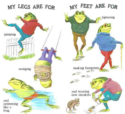 My Head-to-Toe Book by Jean Tymns, illustrated by Tibor Gergely (1974) frog