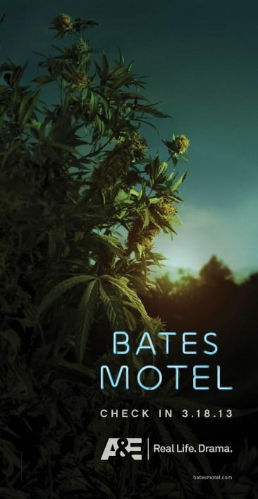 Bates_Tease_Plant