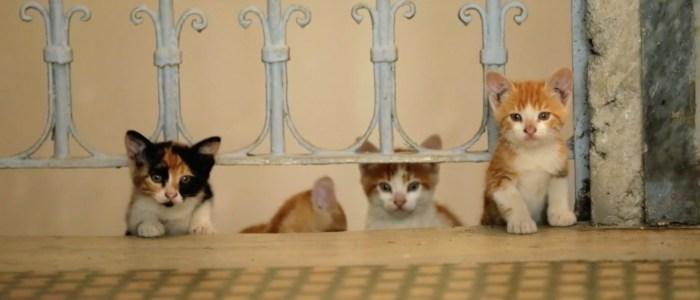 Kedi trailer