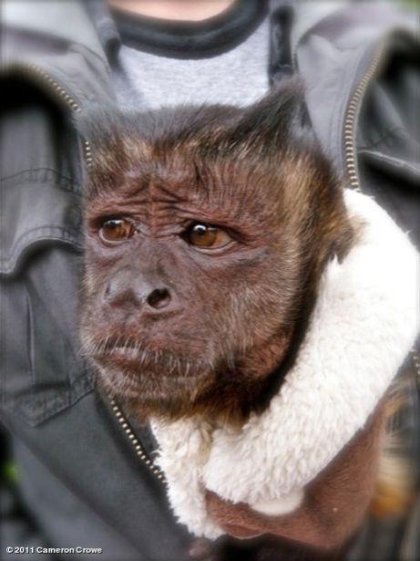 We Bought A Zoo - Monkey