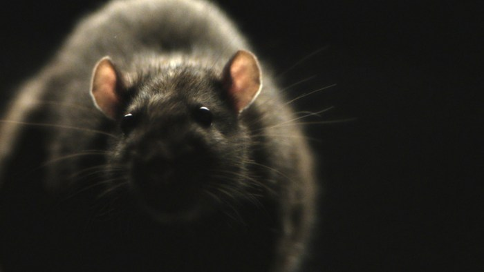 morgan spurlock's rats trailer
