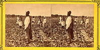 The History of American Slavery Episode 6: Money and Cotton