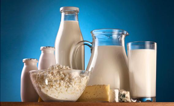 Globally, lactose intolerance is the norm; around two-thirds of humans cannot drink milk in adulthood