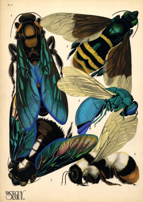 EA Seguy insects history: Prints of insects for art ...