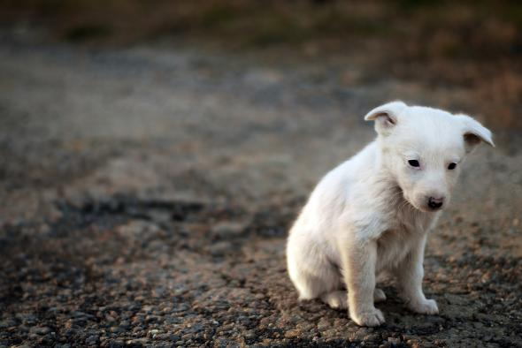 Image result for sad puppy
