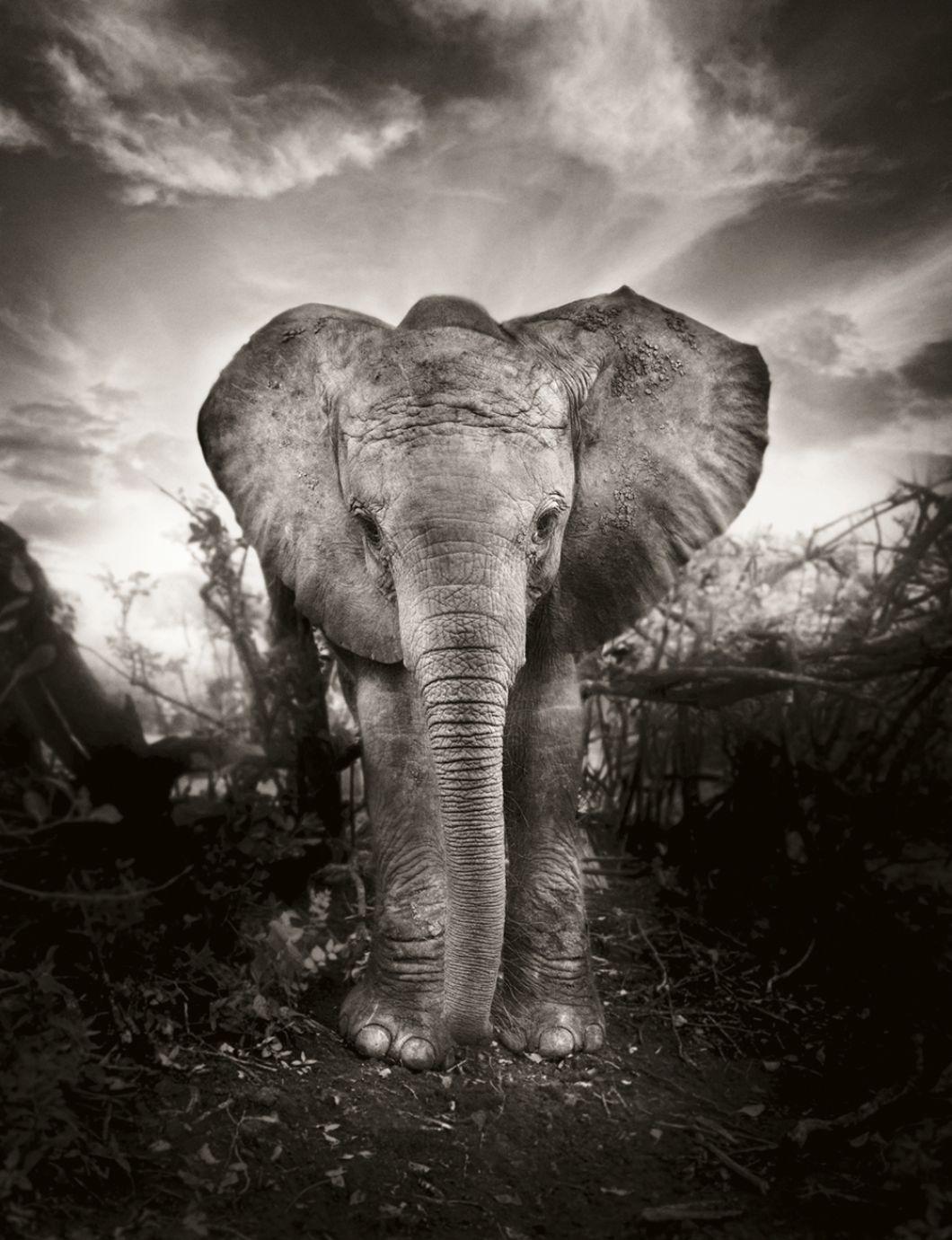 «Ce projet a commencé comme une sorte de coïncidence –ou comme un signe du destin, si vous préférez. J'étais déjà tombé amoureux de l'Afrique; je m'étais renduau Ghana et en Afrique du Sud pour plusieurs reportages. En 2009, mon fils Konstantin a eu 15 ans et comme cadeau d'anniversaire, nous avons fait de lui le parent adoptif d'un petit éléphant orphelin, âgé d'un an et nommé Kibo.»