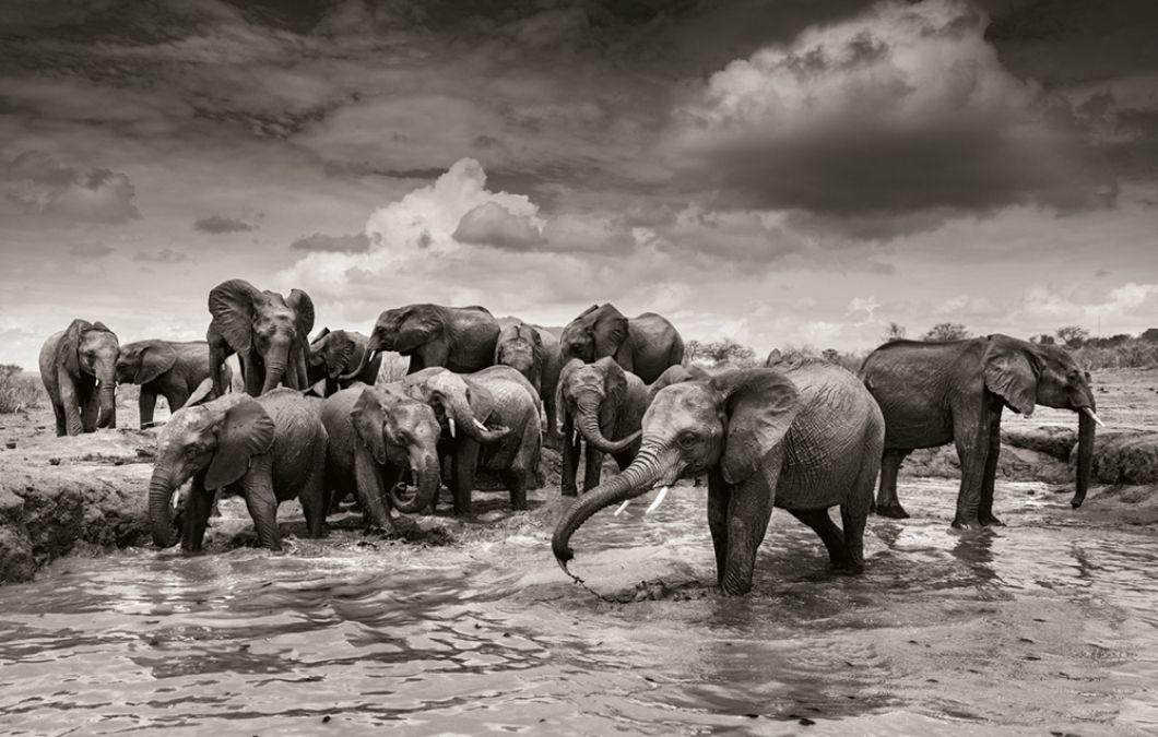 «Les jeunes éléphants prennent des bains de boue tous les jours: il est très important de protéger leur peau contre l'agressif soleil africain. Ils sont comme des enfants dans une piscine: les plus âgés submergent les petits et les poussent dans la boue. C'est pourquoi tous ne sont pas autorisés à y aller en même temps. Cette image du bain de boue est l'assemblage de plusieurs images prises au même endroit, pendant une heure.»