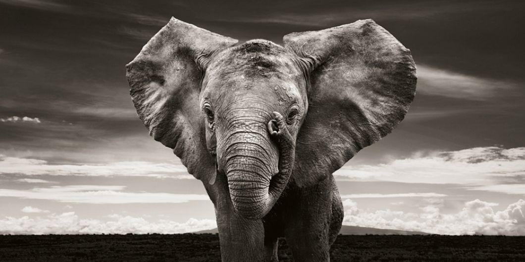 «Être entourés par tous ces petits éléphants orphelins a changé nos vies. C'était le début d'une amitié merveilleuse et de notre collaboration avec le Trust. Les images nous ont donné la possibilité d'aider cette organisation, de soutenir son fantastique travail au fil des années et de le rendre plus connu en Allemagne.»