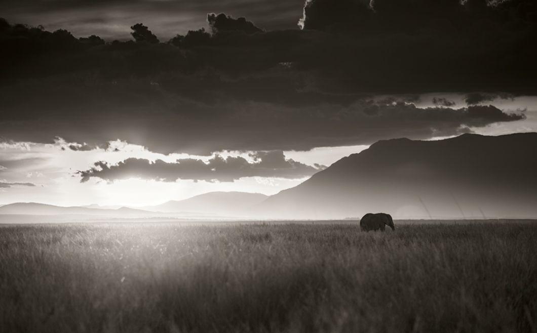«La couleur distrait, c'est pourquoi je photographie en noir et blanc, ce qui permet de diriger l'attention sur la composition, la lumière et le contenu. Presque toutes les photographies ont été prises avec un format moyen Hasselblad numérique. Je n'ai presque jamais utilisé de téléobjectif, car je voulais être proche des animaux.»