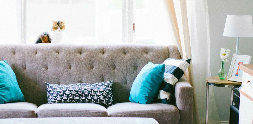 Matou de luxe | Nathan Fertig via Unsplash