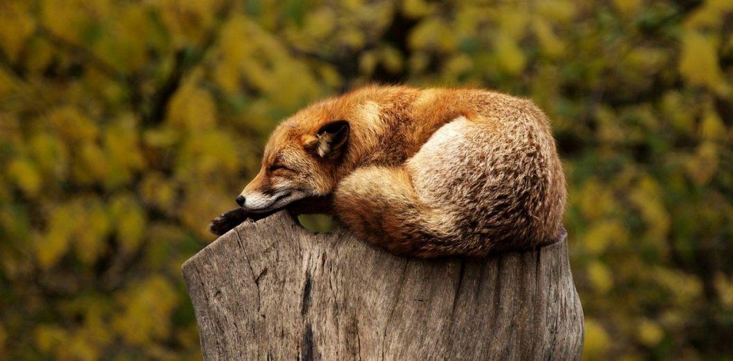 Bien dormir aide à rester de bonne humeur et cognitivement performant·e. | Pexels via Pixabay