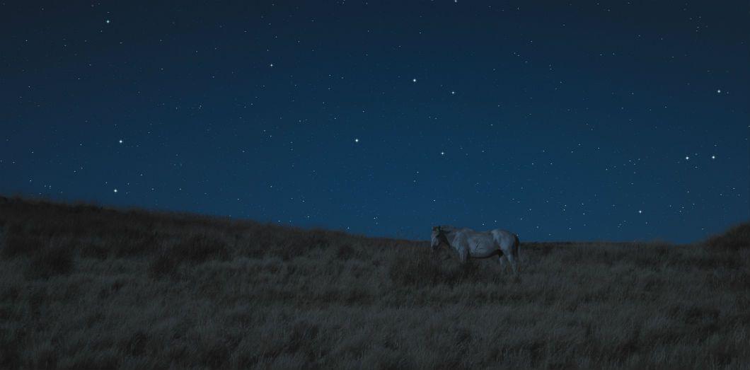 Dans le monde entier, les animaux de toutes races adoptent un mode de vie nocturne | Nacho Ronchon via Unsplash CC License by