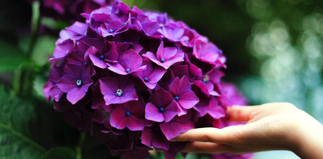 Vertes ou pas, les plantes n'aiment pas vos mains | Gaestano Cessati via Unsplash CC License by