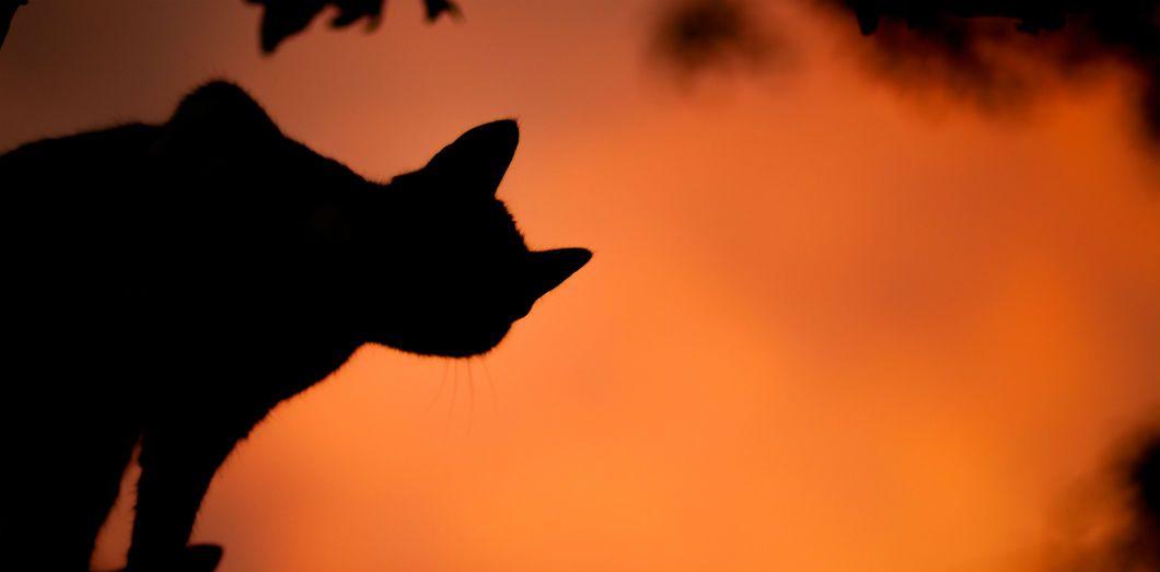 Les Californien·nes doivent parfois évacuer leur logement très rapidement. Bien souvent, les animaux de compagnie ne sont pas du voyage.| Sašo Tušar via Unsplash