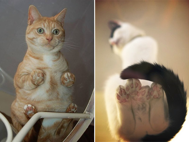 Katzen Im Glas