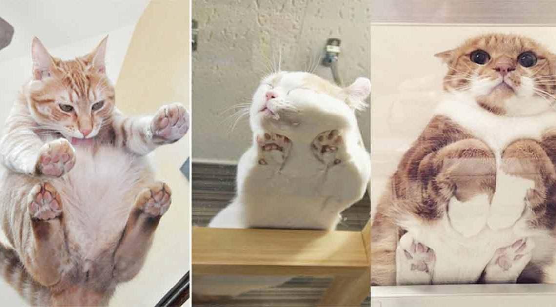 katzen auf glas beitragsbild