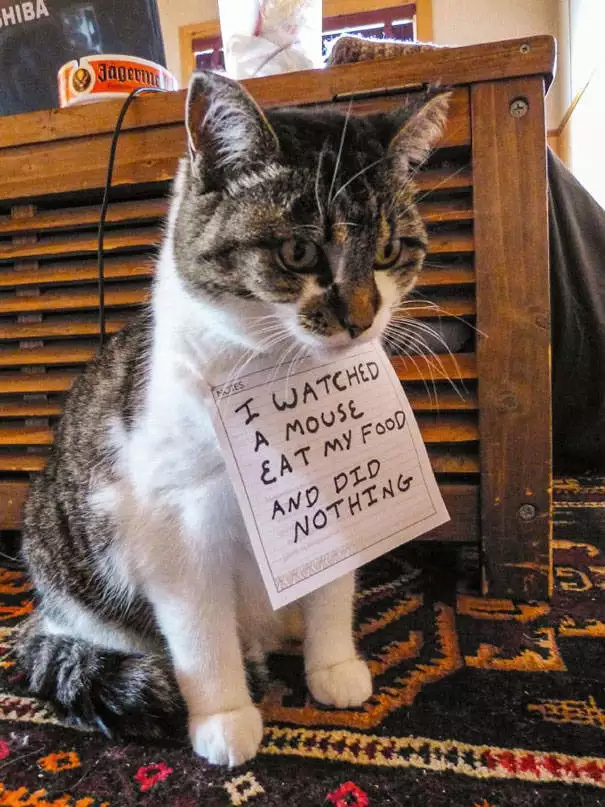 catshaming6