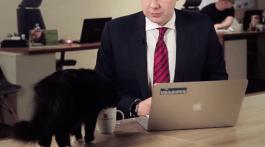 Katzen Politik Riga Catcontent