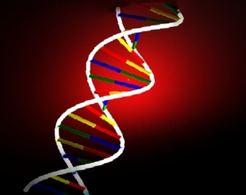DNA sleep and genes
