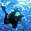 Fotoalbum – Unterwasserwelt