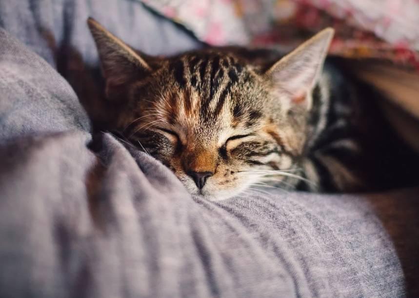 Kvalitní spánek je velmi důležitý