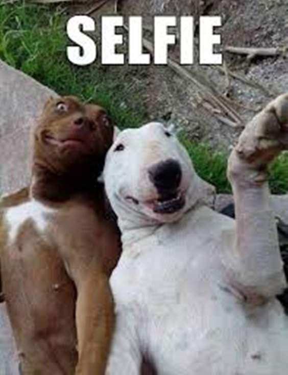 10 Funny Animals Memes For You to Laugh 3