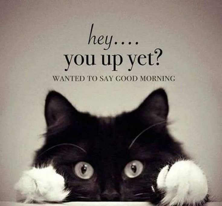 35 Funny Good Morning Quotes With Images 24